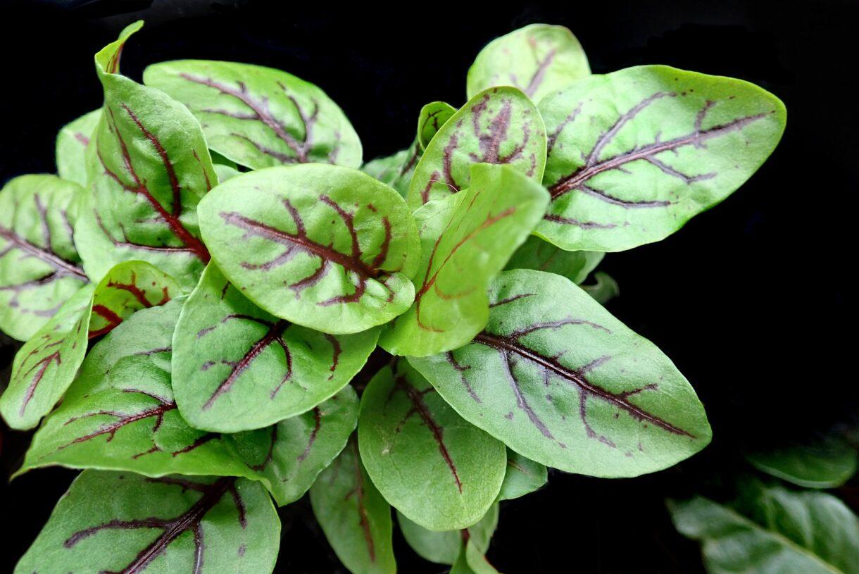 10 roślin bogatych w witaminę C do uprawy w domu